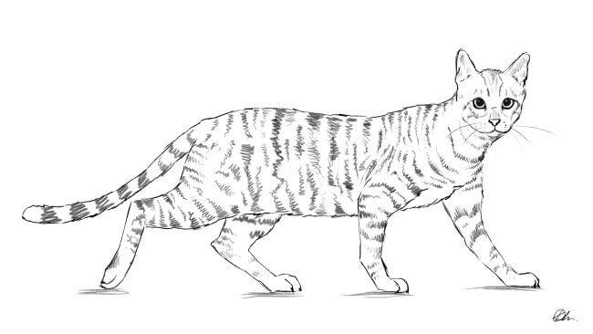 Як намалювати кота: поетапно крок за кроком