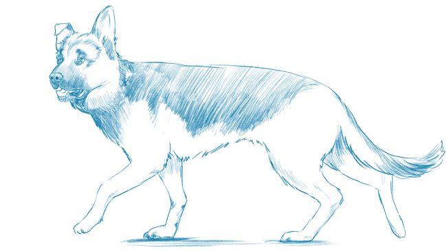 Как нарисовать собаку: пошаговое руководство
